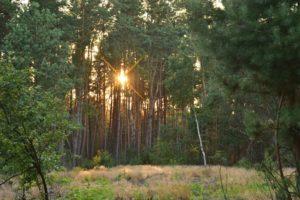 Natuurbegraafplaats juli'18