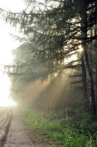 Zonlicht door de bomen (2)