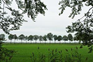 Bomenrij Bewust Vechtdal contrast