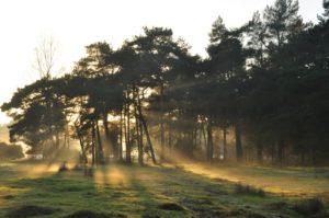 Nov. Mist over het Junner Koeland