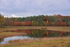 November Herfst in het Varsenerveld