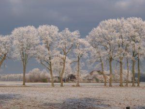 Stegeren in winterkleed